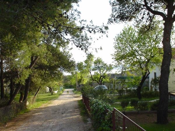 Apartments Croatia Price - Apartments Udovičić Sv. Filip and Jakov - Iznajmljivanje apartmana - Sv. Filip i Jakov 14